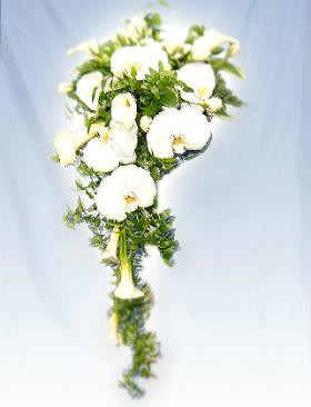 胡蝶蘭のブーケ写真